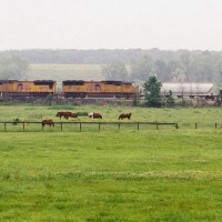 Union Pacific and horses in the fog.