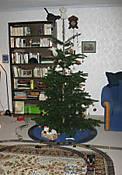 07-12-24_IMG_2739_tree_train.jpg